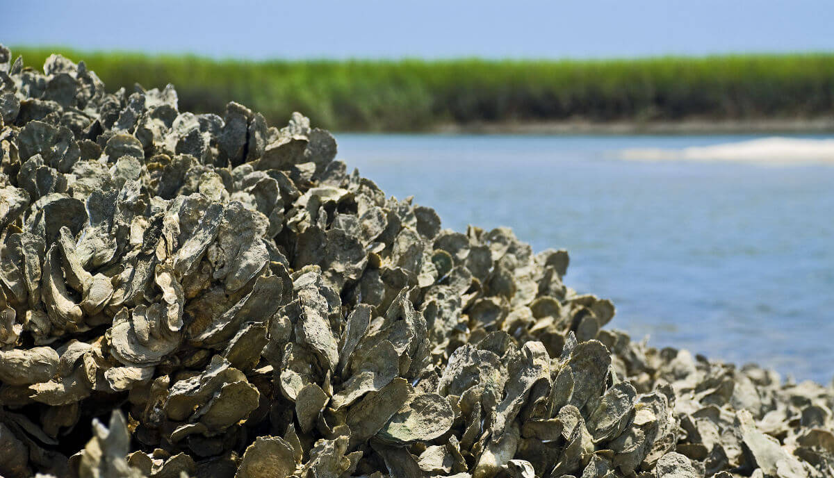 Save the Oysters! UCF Town & Gown Annual Friendship Luncheon Goes ...