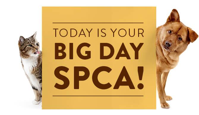 Big day SPCA