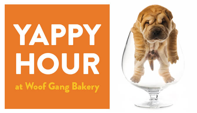 Yappy hour and Woof Gang Bakery. Dog in a bowl.