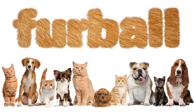 Furball 2016 Olando Pet Alliance